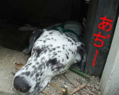 blog2010_08220083