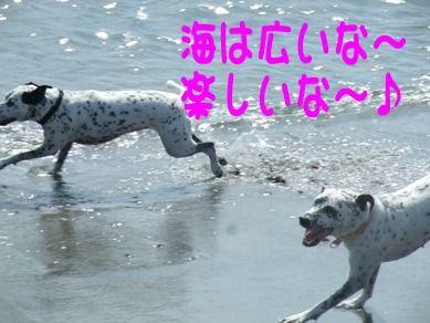 blog2010_09180009