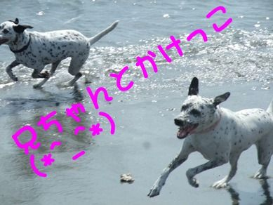 blog2010_09180010