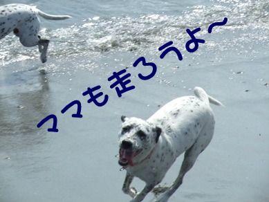 blog2010_09180011