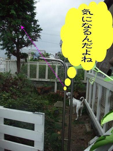 blog2010_10030043