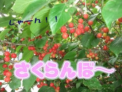 blog_05090002