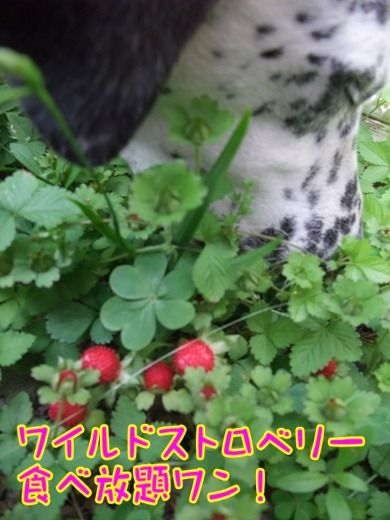 blog_05150020