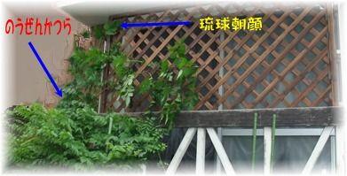 blog_06110021