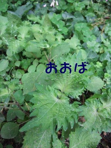blog_06110027