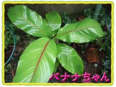 blog_07070015