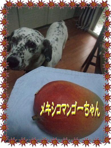 blog_07070004