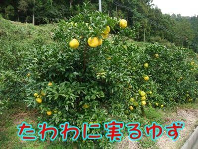 blog_10290010