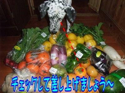 blog_10290018
