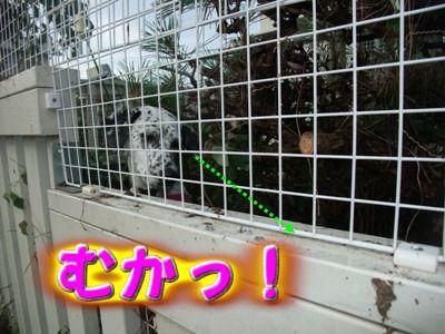 blog_11060015