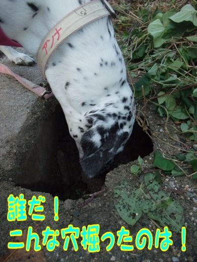 blog_11110004