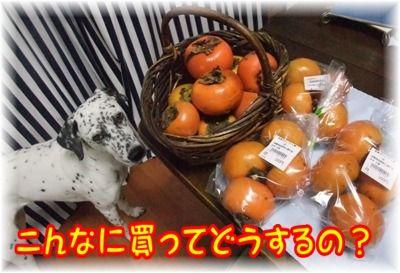 blog11060010