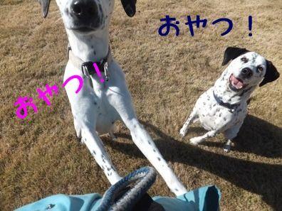 blog12250067