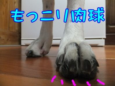 blog_0610_184411