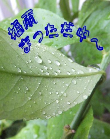 2012_0616_162921