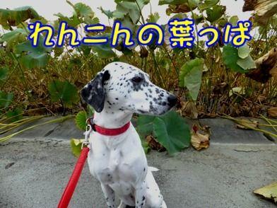 blog_0922_074039