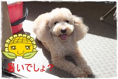2012_0718_093324-IMG_7457.jpg