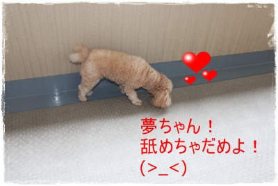 2012_0724_134132-IMG_7506.jpg