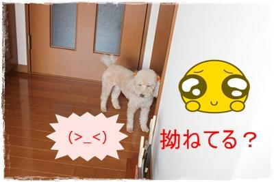 2012_0927_124450-IMG_7747.jpg