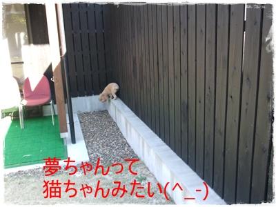 2012_1103_091501-DSCF6650.jpg