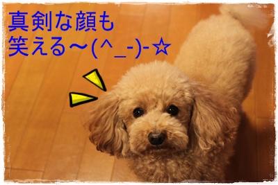2012_1128_211919-IMG_8365.jpg