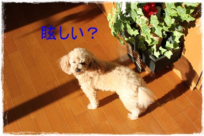2012_1130_091633-IMG_8399.jpg