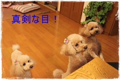 2012_1204_213159-IMG_8442.jpg