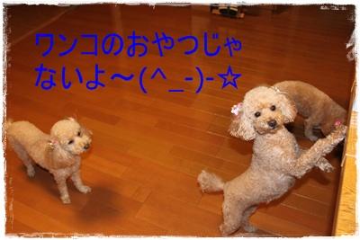 2012_1210_210313-IMG_8508.jpg