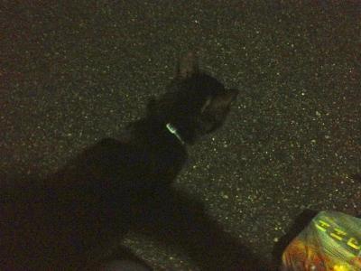 黒猫240831_01