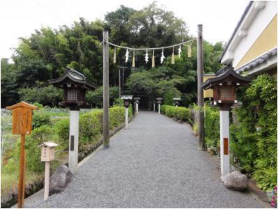 桜井240814_16