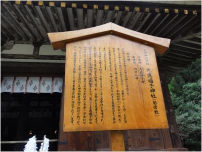 桜井240814_24