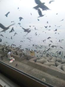 そして日々は続く-鳥トルネード