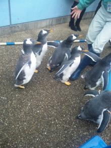 そして日々は続く-ペンギン