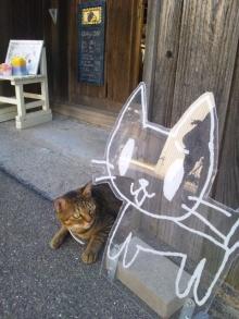 そして日々は続く-猫の看板と看板猫