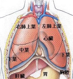 lung12.jpg