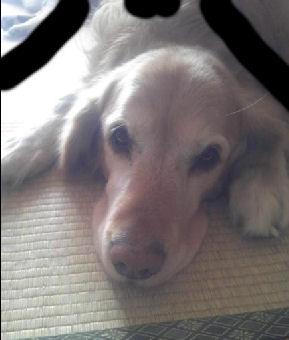 愛犬の遺影