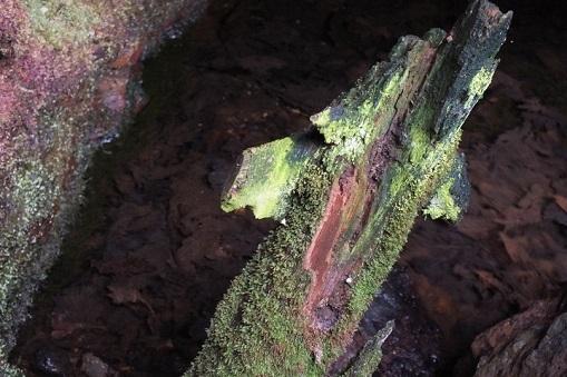戸井鉱山 光苔