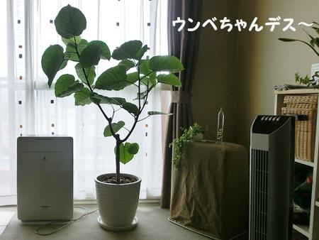 CIMG5789-cropあ