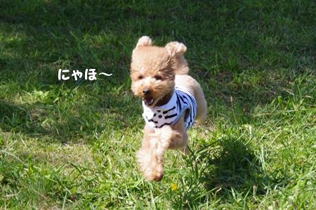 IMGP0932-cropあ