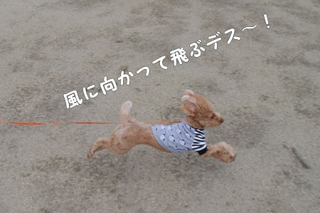 IMGP2814あ-cropあ