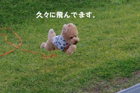 IMGP3208-cropあ