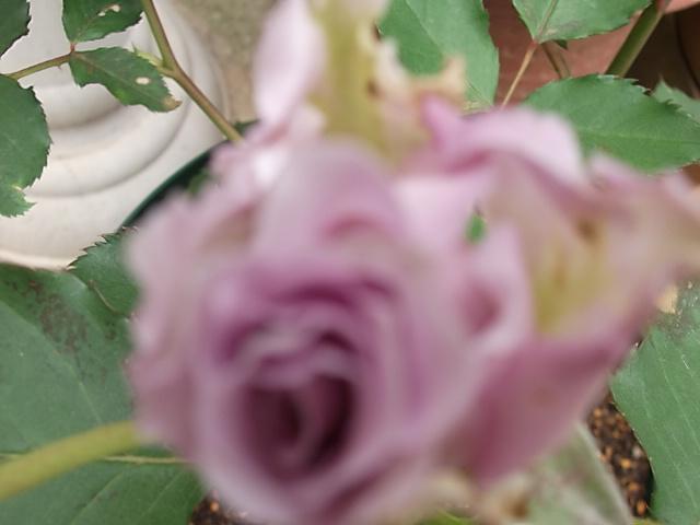 DSCF3359 (2)