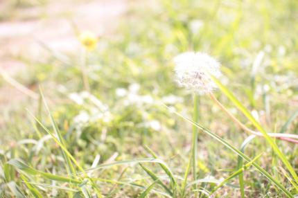 010+(2)_convert_20121006232428.jpg