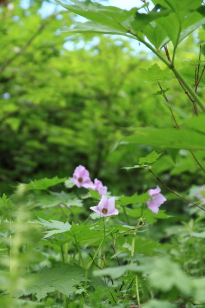 2012_0723_花_47