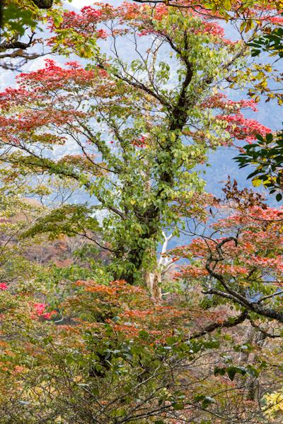 2012_1020_2_37.jpg
