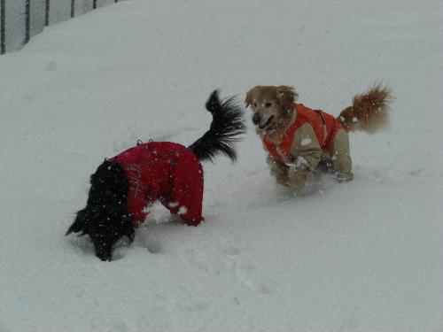 レオ雪遊び1