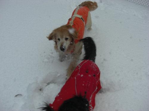 レオ雪遊び2