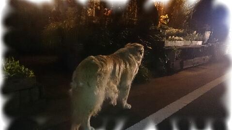 PicsArt_1383488550142夜の散歩