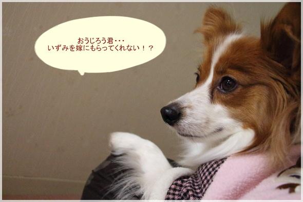 9_20130128190903.jpg