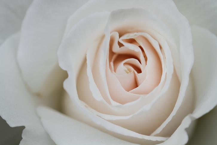 2012.05.12・『 花の文化園・薔薇 』 大阪府 河内長野市 10